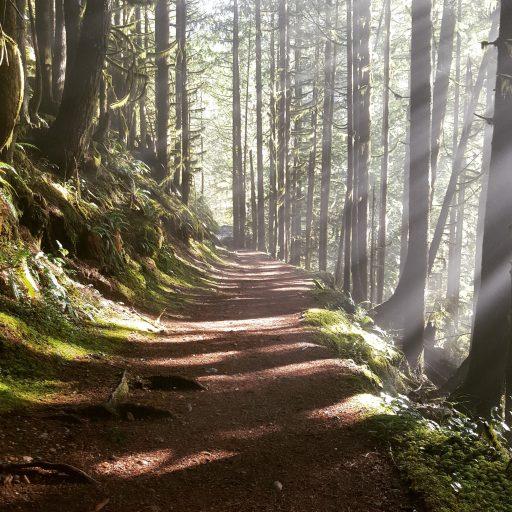 cropped-woods-20232641.jpg