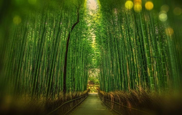 kyoto-1860521_960_720
