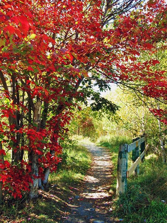 pathway-1443166_960_720